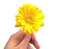 Temps de fleur Photo libre de droits