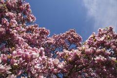 Temps de fleur Images libres de droits