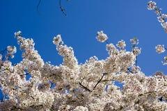 Temps de fleur au printemps Image libre de droits