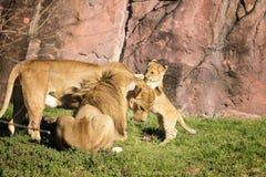 Temps de jeu au zoo photos stock
