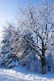 Temps de l'hiver image libre de droits