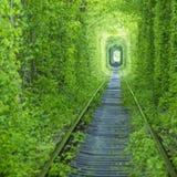 Temps de manière de tunnel et de rail de forêt au printemps Photo libre de droits