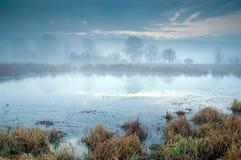 Temps de matin dans la zone de marais Image libre de droits