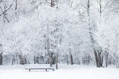 Temps de Milou en parc Image stock