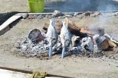 Temps de poissons Images libres de droits