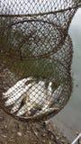 Temps de poissons Images stock