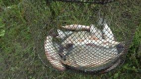 Temps de poissons Photo libre de droits