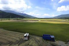 Temps de récolte de riz photos stock