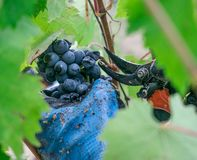 Temps de récolte en Toscane photographie stock