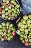 Temps de récolte, pommes Pommes fraîches organiques dans le panier APPL frais Photos libres de droits