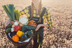 Temps de r?colte dans le pays, l?gumes de offre d'agricultrice image stock
