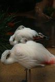 Temps de repos pour des oiseaux Images stock