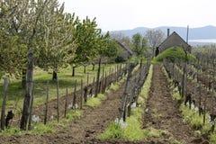 Temps de vigne au printemps photo libre de droits