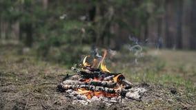 Temps-faute du petit feu de camp brûlant au printemps la forêt banque de vidéos