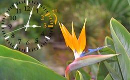 Temps heure d'été DST Horloge murale allant à l'horaire d'hiver Tournez le temps en avant images libres de droits