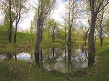 Temps marécageux de territoire au printemps Photo stock