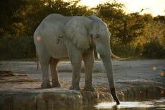 Temps potable d'éléphant Photos libres de droits