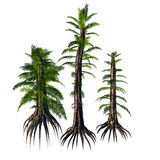 Tempskya sp Trees Royalty Free Stock Images