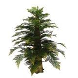 Tempskya Tree Stock Image