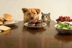 Temptation. This time, we go on the count of one. (Dog and cat ready for the feast Royalty Free Stock Photo