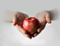 Temptation apple. Red apple in female hands stock images