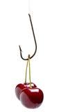 Tempting cherry bait Stock Photo