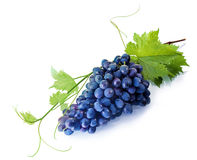Tempting fresh purple table grapes Royalty Free Stock Images