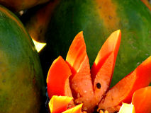 Tempting Fruits stock photo