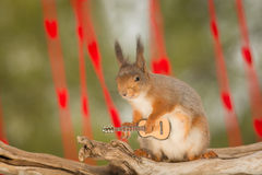 Temptress guitar music. Red squirrel with guitar looking in the lens Stock Photography