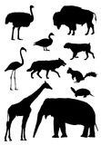 Ten animal silhouette Stock Images