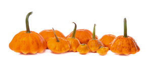 Ten bush pumpkins Stock Image