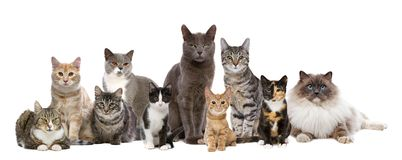Ten cats in a row royalty free stock photography