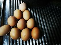 Ten chicken eggs on aluminium shelf royalty free stock photography