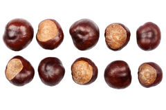 Ten conkers Royalty Free Stock Image