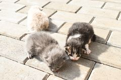 Ten days old baby cats on the pavement in the back yard royalty free stock photo