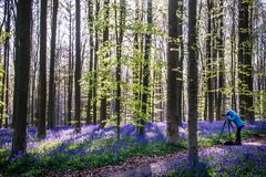 Magical forest royalty free stock photo