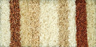 Ten different varieties of rice stock photo