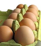 Ten eggs. Ten fresh eggs in packaging Stock Image