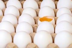 Ten Fresh White Eggs In A Container Stock Photos