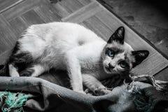 Ten kot jest bardzo odważny i przystojny zdjęcia royalty free