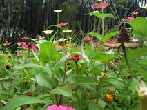 Ten kwiat więdnie znowu i rośnie przez ziaren w nim zdjęcia royalty free