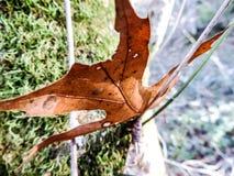Ten liść Przychodził Dobrze Przy Ja Zdjęcia Stock