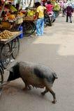 Ten Mały Piggie Iść Wprowadzać na rynek, India Fotografia Stock