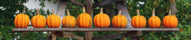 Ten orange pumpkins on a wooden shelf  Stock Photos
