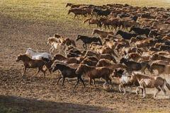 Ten thousand steeds gallop Stock Photos