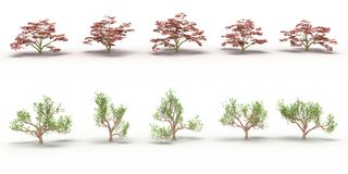 Ten trees with red and green leaves Stock Image