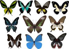 Ten tropical butterflies Royalty Free Stock Images