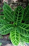 Ten wizerunek jest Zielonym liścia wizerunkiem zdjęcie stock
