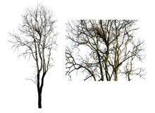 Ten wizerunek odizolowywa nieżywi drzewa na białym tle zdjęcie stock