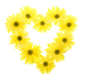 Ten Yellow Daisy Flowers in Heart Shape Stock Photo